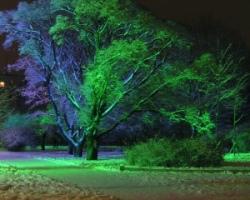 подсветка деревьев светодиодами