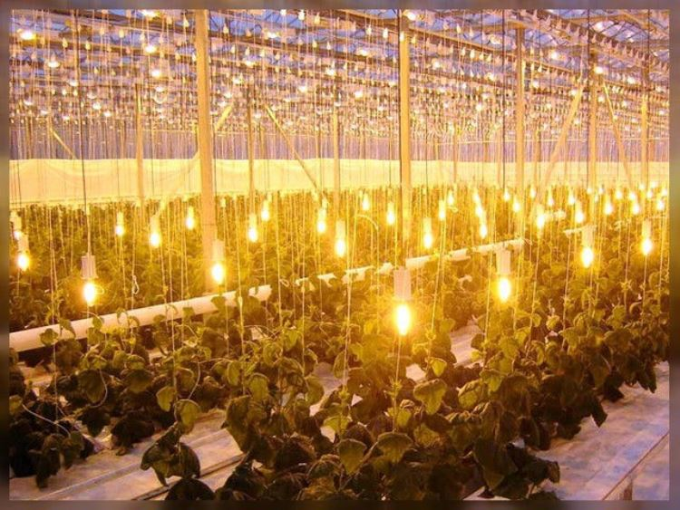 подключение лампы дрл