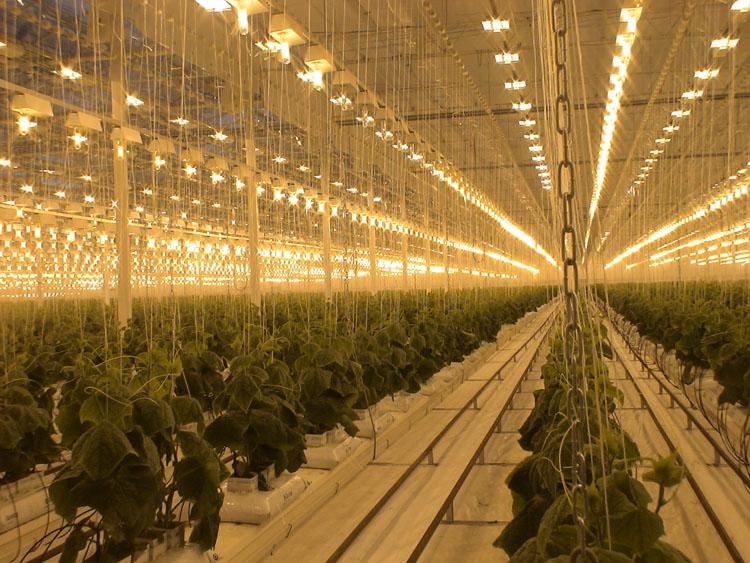 дназ для растений