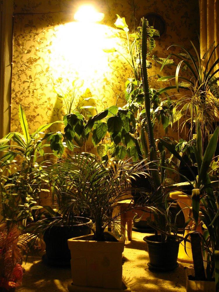 днат для растений